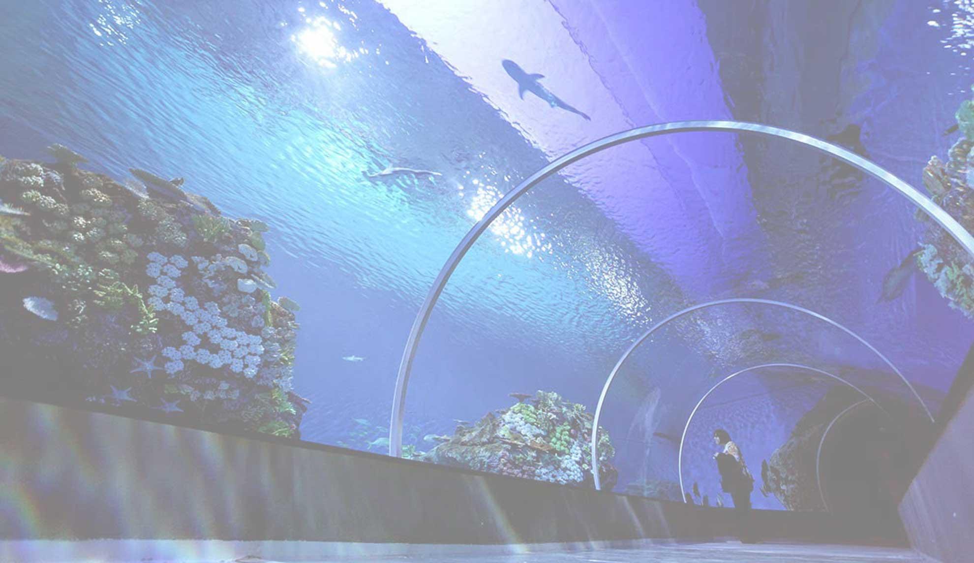 Fondo túnel de acuario de Sevilla