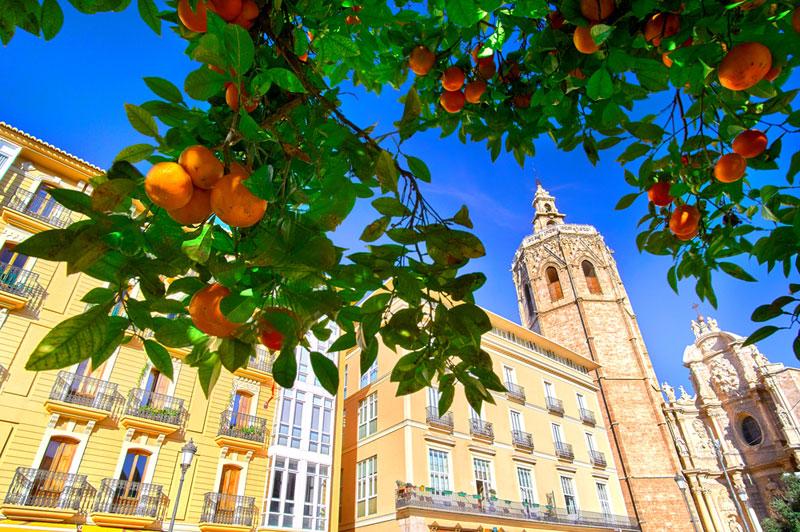 naranjos ciudad de sevilla